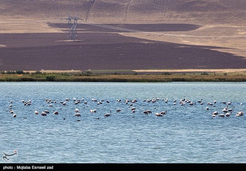 شیرین کردن آب دریا چقدر می تواند مشکل کم آبی را در کشور بر طرف کند؟
