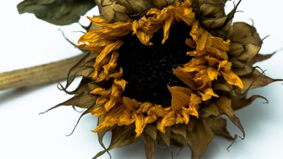 روش خشک کردن گل طبیعی با ماکروویو