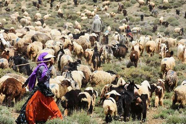 افزایش 2500 تنی فراوری گوشت توسط عشایر