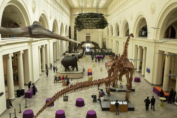 مقاله: موزه تاریخ طبیعی فیلد شیکاگو آمریکا (Field Museum)
