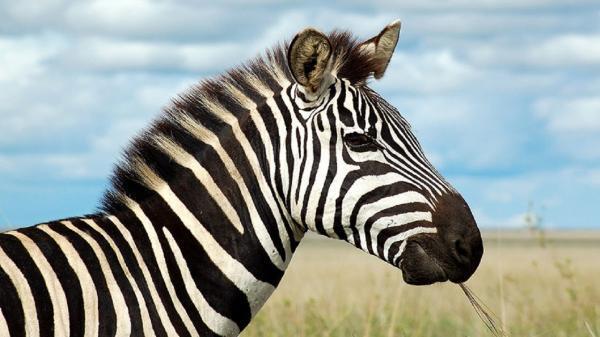 شرایط اسف بار باغ وحش صفادشت بار دیگر گریبانگیر حیات وحش شد، باغ وحش های غیر استاندارد که نظارتی بر آن ها نیست